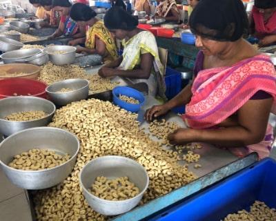 豆を選別するインドの人々